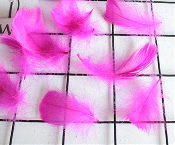Decor color feather, fuksija 50 ptc.